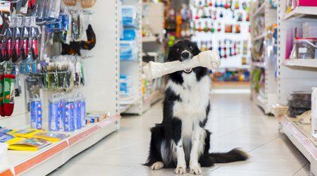 Un chien dans une animalerie avec un os dans la gueule